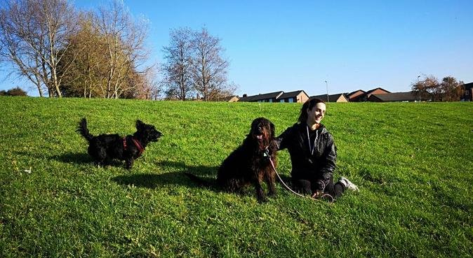 Pawadise Dog-sitter, dog sitter in Liverpool