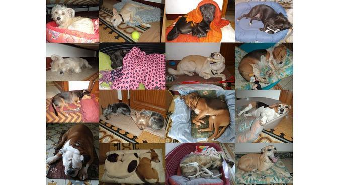 PAZIENZA, ESERCIZIO, EDUCAZIONE, AFFETTO, dog sitter a Palermo