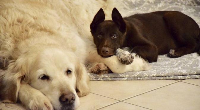 Dog sitter dans le Val d'Oise, dog sitter à Bouffémont