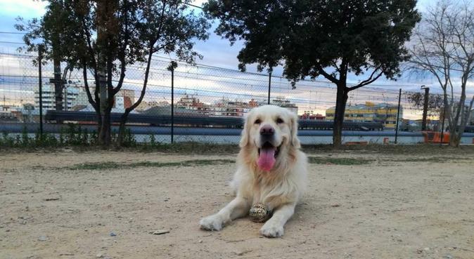 Bienestar perruno, canguro en Barcelona