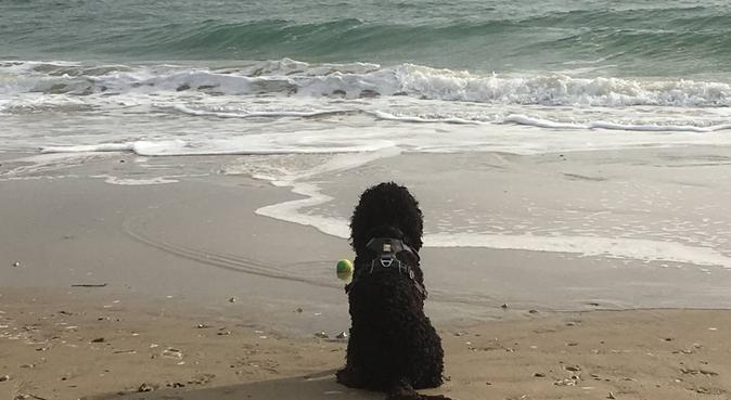 Sandbanks doggy beach heaven, dog sitter in Poole