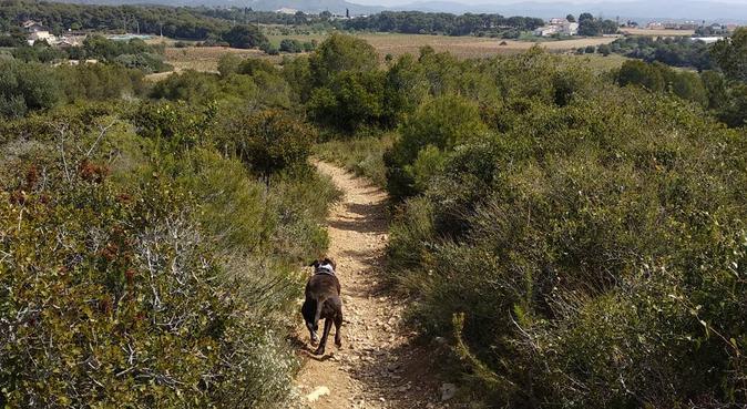 ¡Cuidador experimentado para tu mascota!, canguro en Vilanova i la Geltrú, España