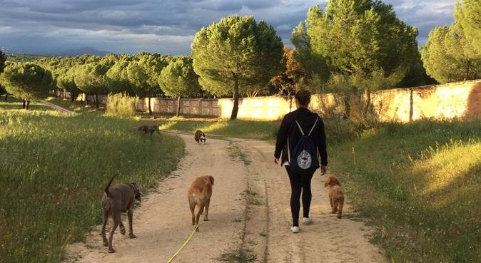 Ejercicio físico,mental y relacional en naturaleza, canguro en Pozuelo de Alarcón, España