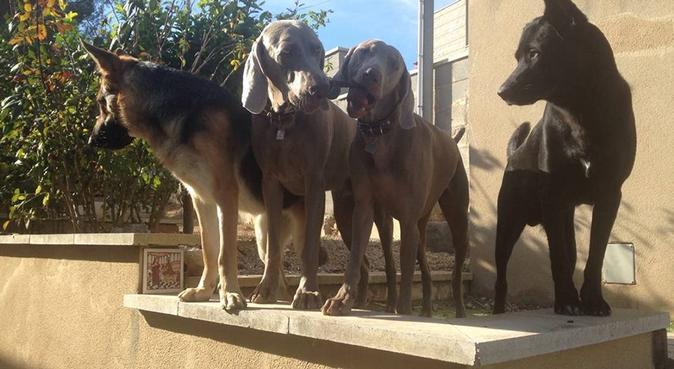 Canguro mascotas/ pet sitter/ pets holidays, canguro en Olivella