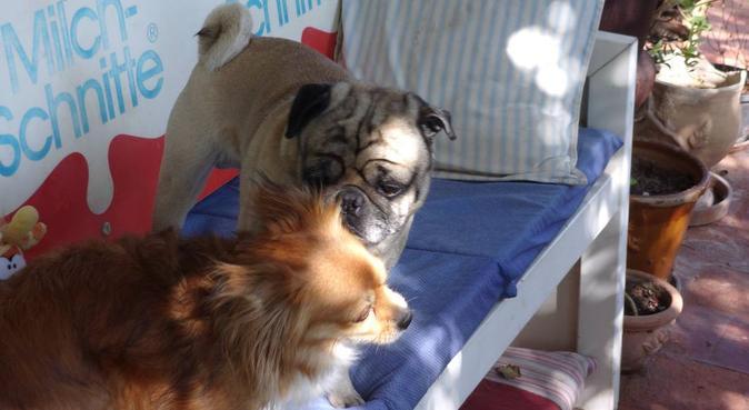 DogHotel Pension de Perros, dog sitter in Santa Eulària des Riu