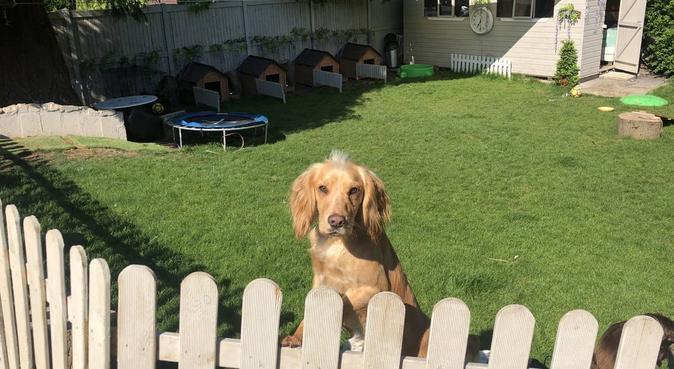 Woofsteria Lane - London & Surrey Dog Services, dog sitter in Epsom
