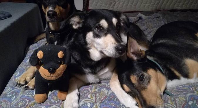 Mi prenderò cura di ogni bisogno del tuo cane!, dog sitter a Aci Sant'Antonio