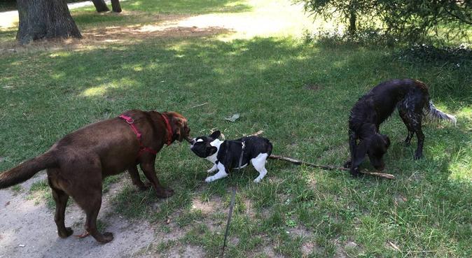 Balades au Bois de Boulogne et câlins à la maison, dog sitter à Suresnes