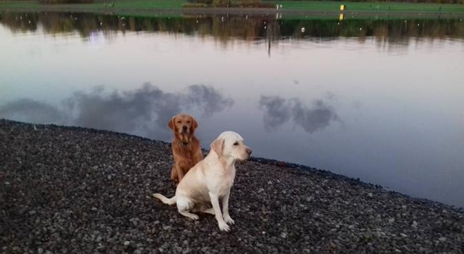 The pack Leader professional Dog services, dog sitter in Bellshill