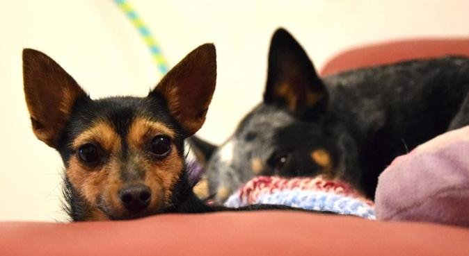 Soggiorno a 5 stelle per i vostri amici pelosi! :), dog sitter a Roma
