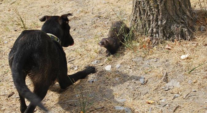 Sea cual sea tu mascota, seré su segundo hogar, canguro en Granada