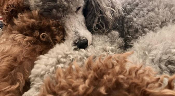 Coccole a casa, lunghe passeggiate al parco!, dog sitter a Roma