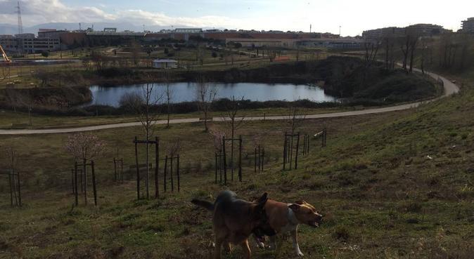 CONDIVIDERE! Esplorare,passeggiare e tante coccole, dog sitter a Roma
