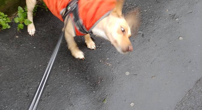 Appassionato esperto disponibile uscite e day care, dog sitter a Milano