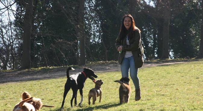 Balades en forêt de Meudon pour chiens & chiots, dog sitter à Meudon, France