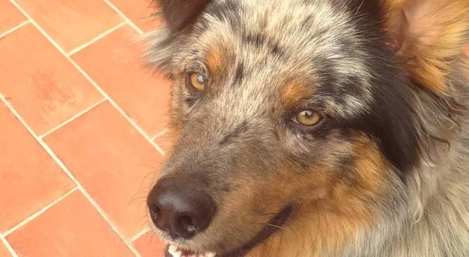 Garde d'animaux domestiques, dog sitter à Aix en provence
