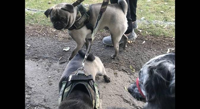 Local responsible dog walker, dog sitter in Chesterfield