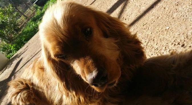 professionalità-sicurezza per cani e proprietari., dog sitter a Vimodrone, MI, Italia