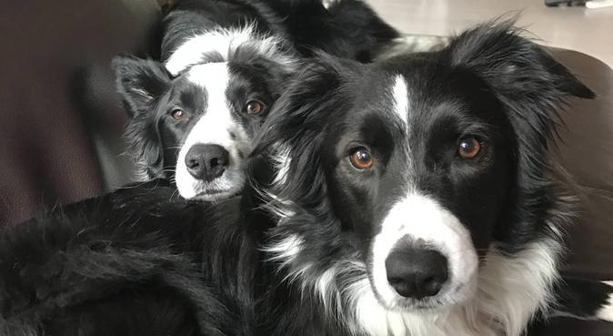 Amante dei cani, per coccole e intrattenimento :), dog sitter a Padova, PD, Italia