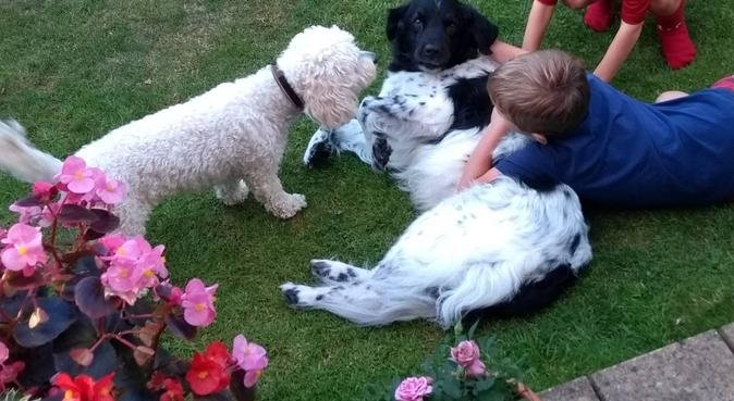Experienced dog loving family, dog sitter in Oxford