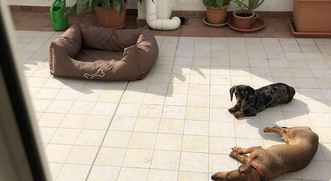 Coccole, passeggiate, divertimento e tanti giochi!, dog sitter a Cagliari