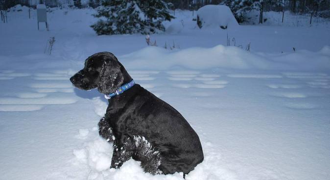 Trygg och kärleksfull hundpassning i Kungsängen, hundvakt nära Uppsala