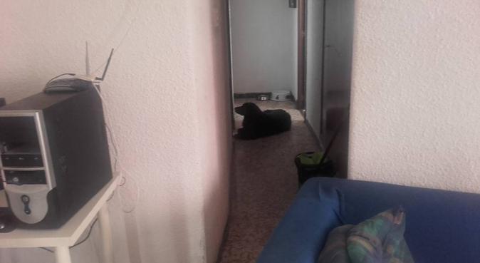 experiencia y dedicaciòn  para tu perro,,, canguro en Zaragoza