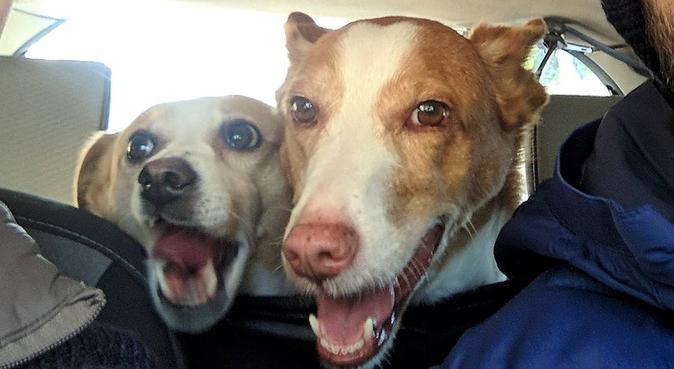 Alojamiento canino - Canguro para tu mejor amigo, hundvakt nära benalmadena