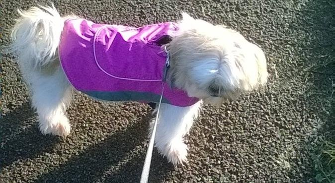 Walking and jogging to stay healthy, dog sitter in Birmingham, UK
