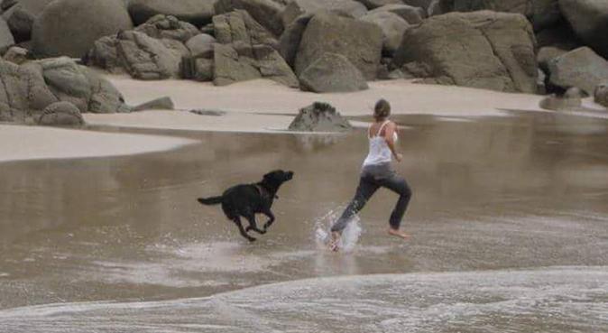Vive les gros toutous !, dog sitter à Marseille