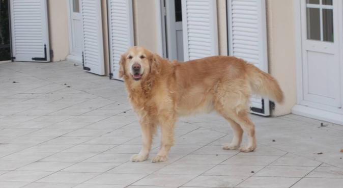 Bienvenue chez nous, dog sitter à Conflans-sainte-honorine