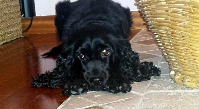 Come d'incanto......Coccole e tante passeggiate..., dog sitter a Perugia
