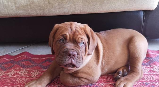 Amour des canins, dog sitter à Toulouse