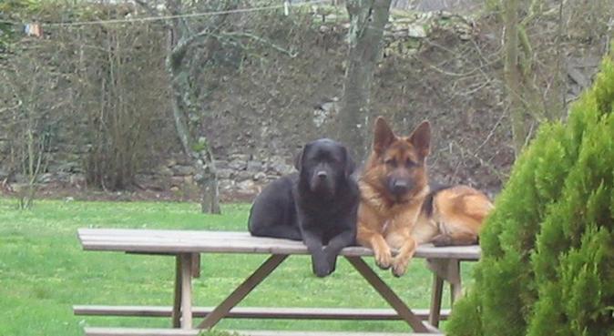 Celle qui murmurait à l'oreille des chiens, dog sitter à RENNES