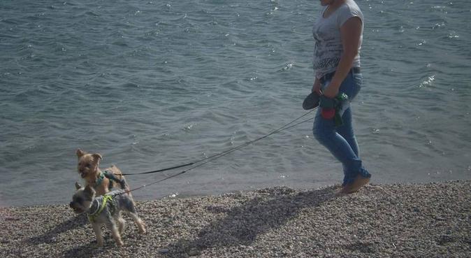 paseadora de perros,animalista enamorada de animal, canguro en Madrid, España