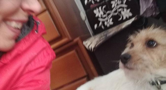 cura e coccole per i vostri cani le trovate da me!, dog sitter a Milano