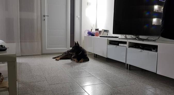 coccole, giochi e passeggiate, dog sitter a Rimini