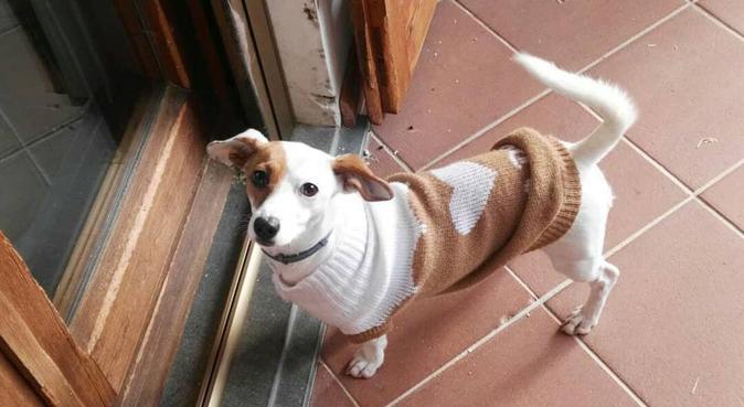 Passeggiate con una giovane aspirante veterinaria, dog sitter a Pisa