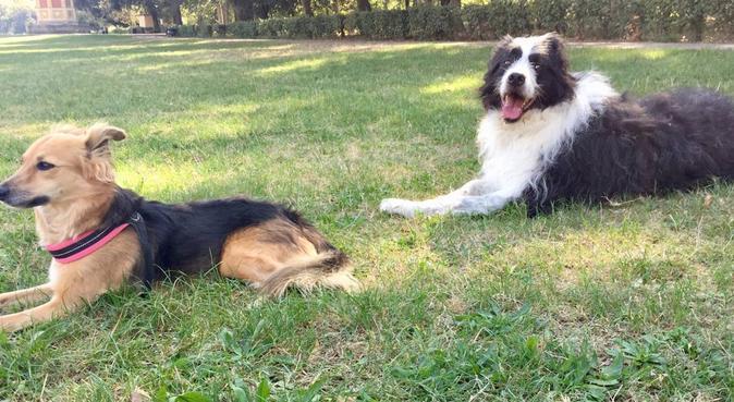 Dog sitter esperto per passeggiate all'aria aperta, dog sitter a Firenze, FI, Italia