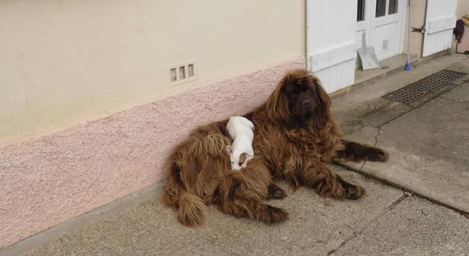 Promenade de chien à la Garde :), dog sitter à La Valette
