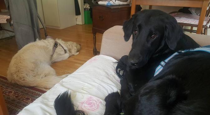 Kattägande hundälskare, anpassar mig efter jycke!, hundvakt nära Bromma