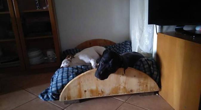 Amo i cani, dog sitter a Genova