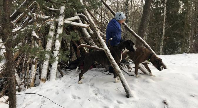 Hund efterlängtas till djurälskande familj, hundvakt nära Johanneshov