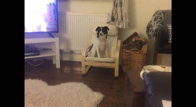 DogBuddy Day Care in Cardiff, dog sitter in Cardiff