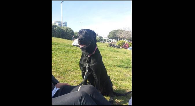 Amo i cani più delle persone, dog sitter a Napoli, NA, Italia