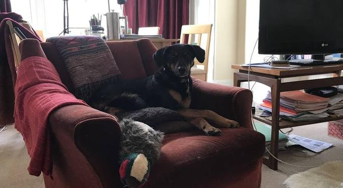 Dog sitting in Edinburgh, dog sitter in Edinburgh, UK