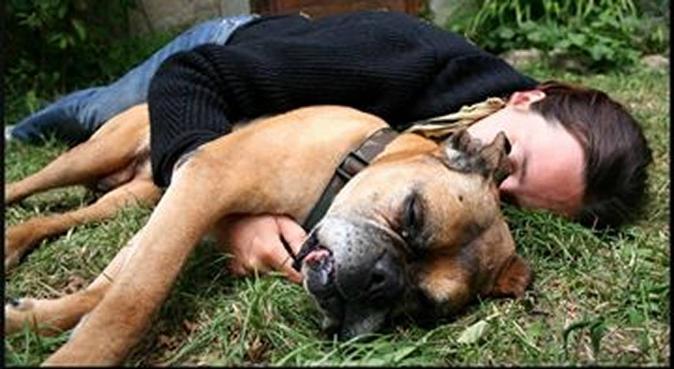 Sortie adaptée au rythme et envie de votre chien., dog sitter à Tours