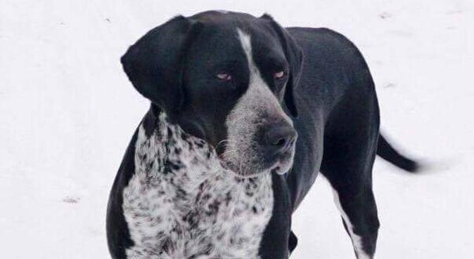 Vous partez en vacances? Votre chien aussi!, dog sitter à Villeurbanne, France