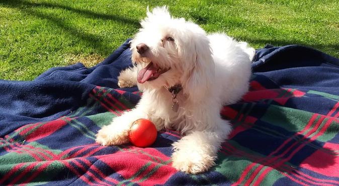 Dog Walker in Uxbridge/Woking, dog sitter in London