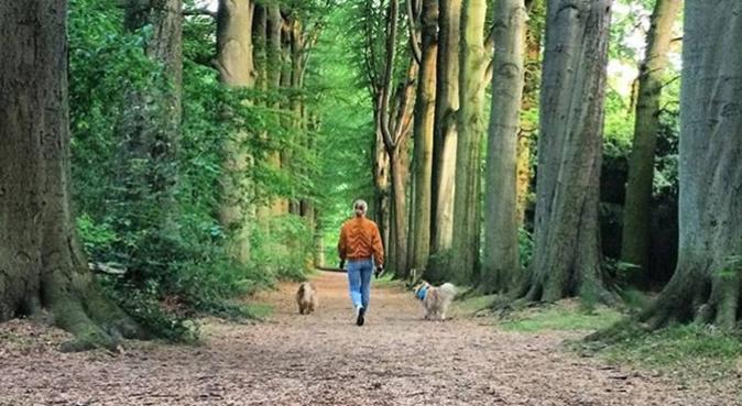 Activ dogwalker i Hässleholm, hundvakt nära Hässleholm, Sverige